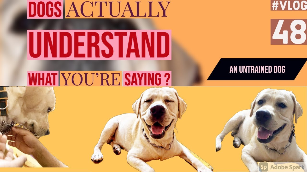 Dog Argue with Mom Funny Dog reaction Dog Parents Dogs actually understand what you39re saying